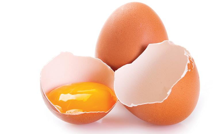 1704 eggs