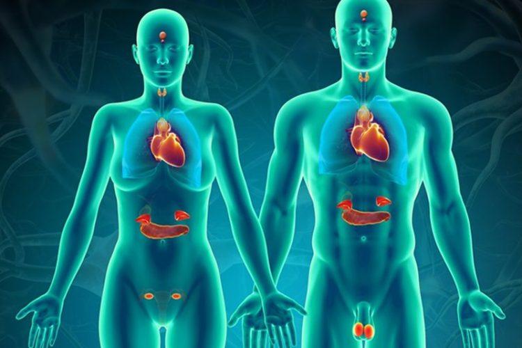 Rối loạn hormone trong cơ thể là nguyên nhân gây ra tình trạng mọc ria mép