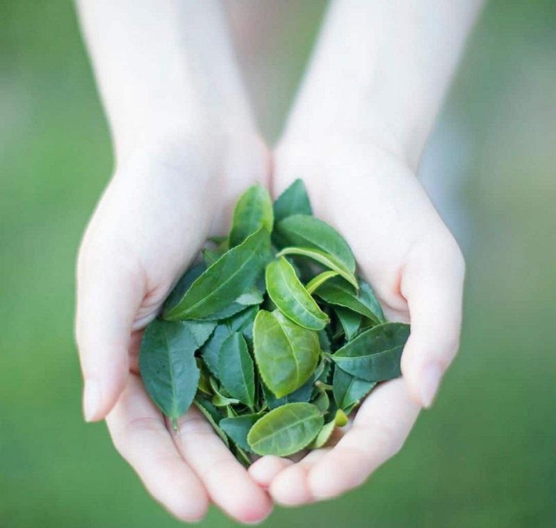Sử dụng trà xanh để làm đẹp hiệu quả