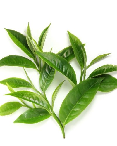 Công dụng dưỡng da bằng trà xanh