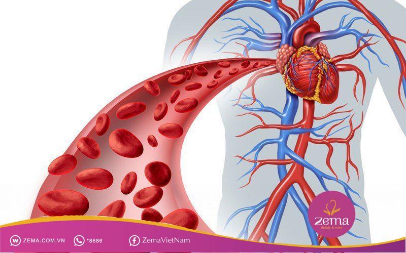 Giúp tăng cường cải thiện tuần hoàn máu