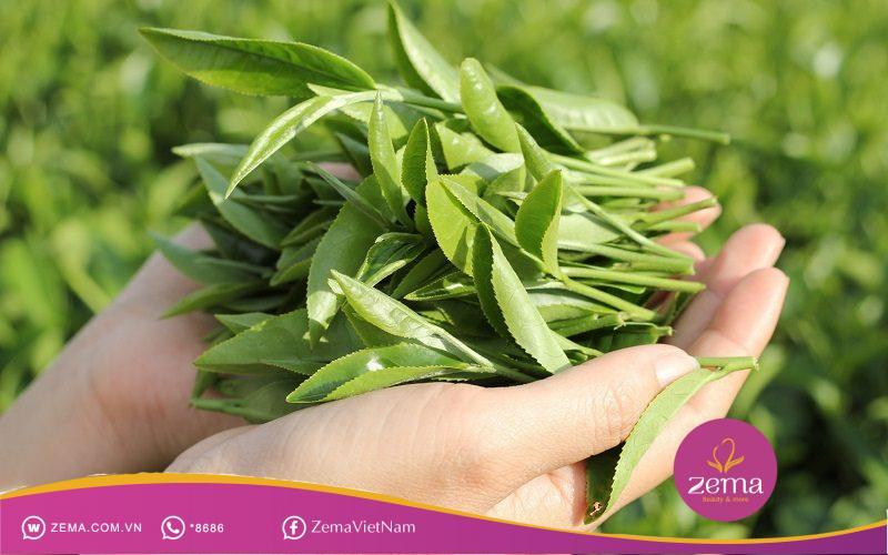 Lá chè xanh cũng giúp da hết viêm da dị ứng hiệu quả
