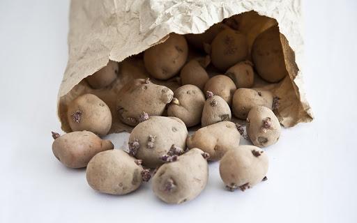 Không sử dụng khoai tây đã mọc mầm để làm mặt nạ trị mụn bằng khoai tây