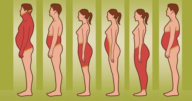 các vùng mỡ được tích tụ nhiều nhất trên cơ thể