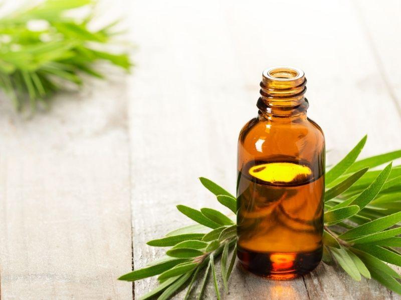 Tinh dầu tràm trà dùng xông mặt cũng giúp loại bỏ mụn nhanh