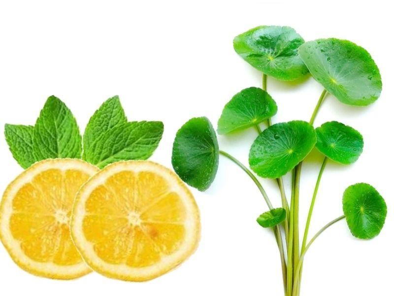 Nước rau má tươi có thể dùng uống giải nhiệt